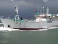 Lagi, Kapal Diduga Bawa 1 Ton Sabu Ketangkap Di Perairan Karimun