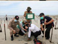 Tanam Mangrove Tingkatkan Kualitas Lingkungan dan Wisata